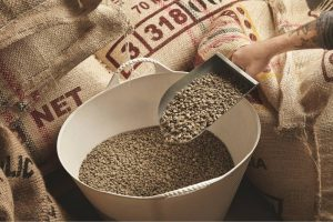 processed green coffee beans
